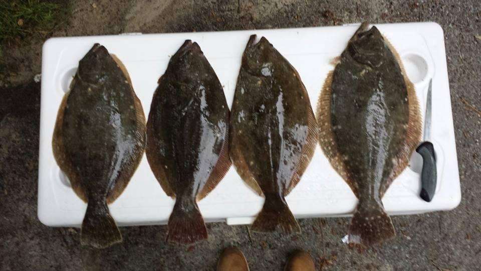 summer flounder, flounder regulations in delaware, lewes canal, dsf, delaware surf fishing