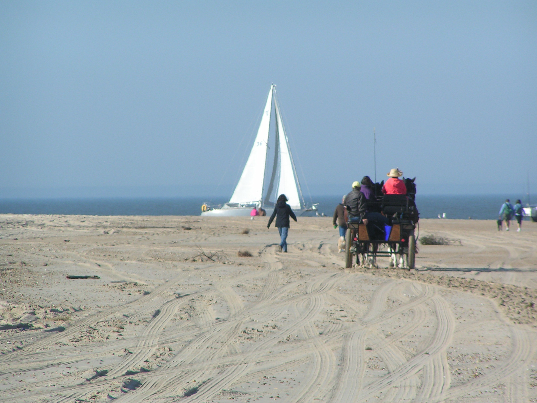the point, cape henlopen state park, dsf, delaware surf fishing, horse and carraige on bach, sailing in delaware