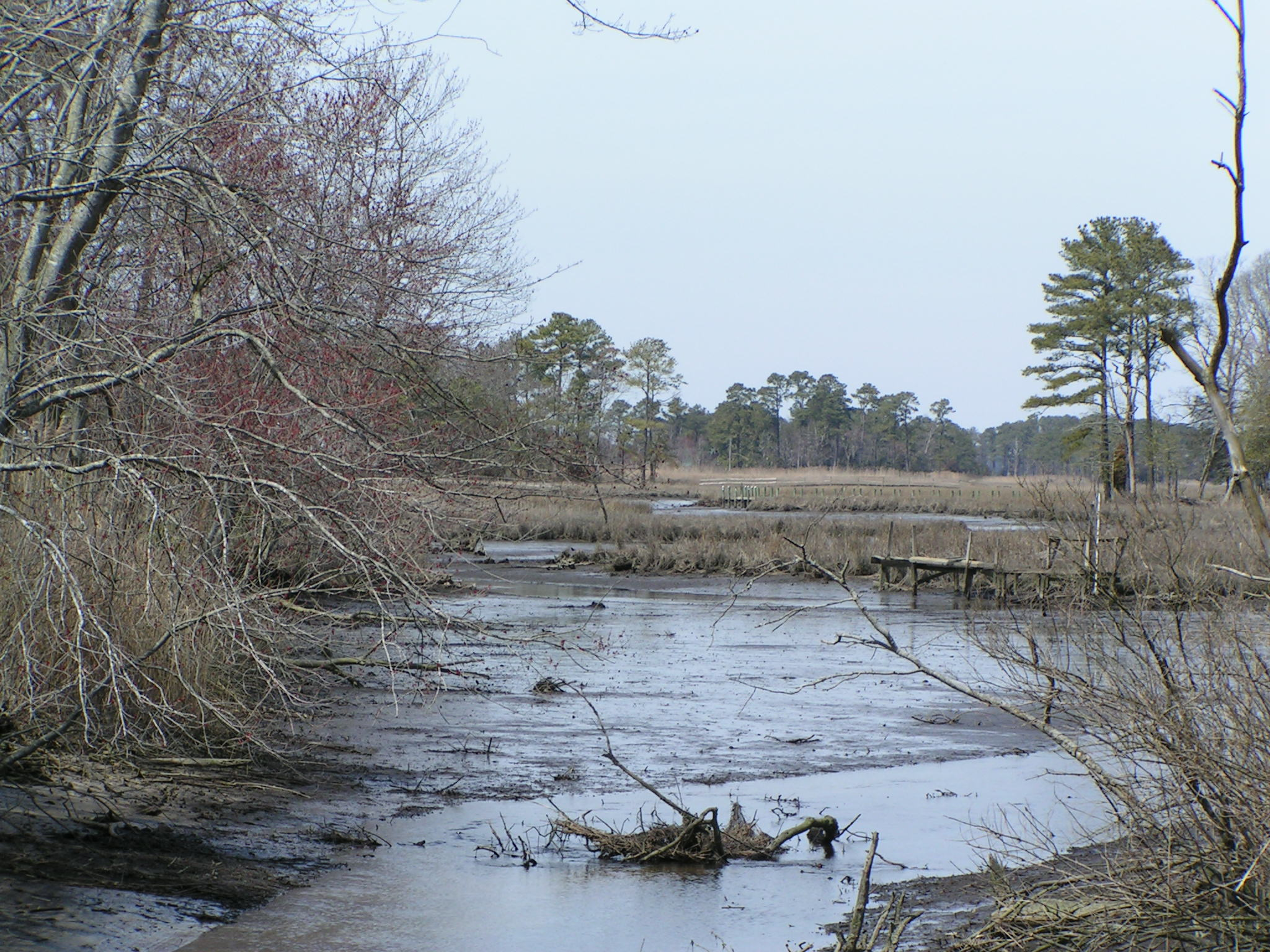 tidal creek, inland bays, indian river, indian river bay,vlasic plant, pinnacle, allen harim