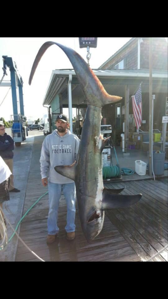thresher shark, atlantic sharks, delaware family fishing