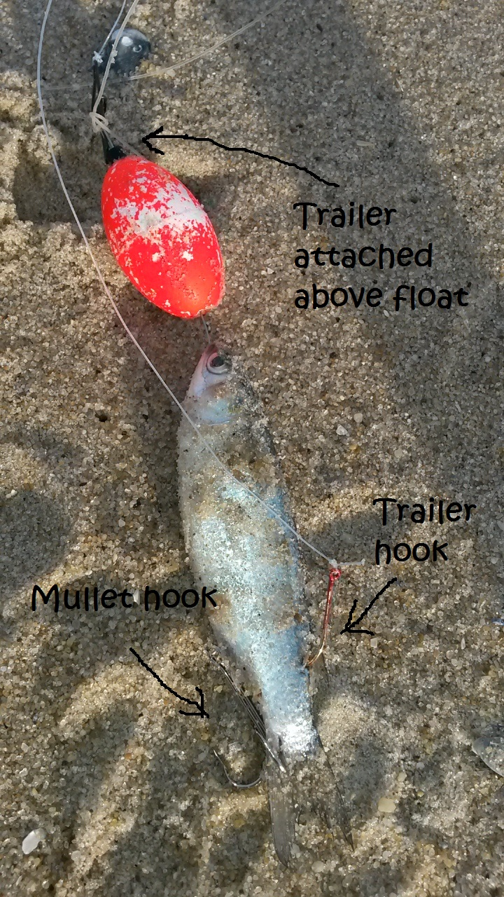 Modified mullet rigs catch more bluefish delaware surf for Blue fish rig