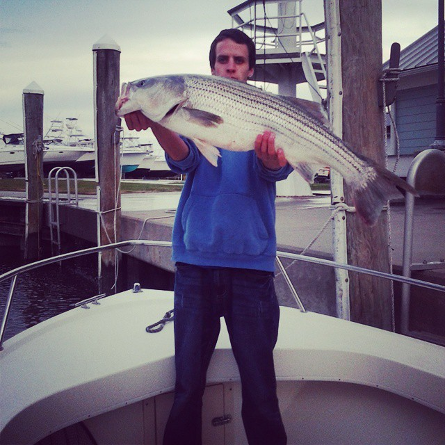 Striped bass and gator blues in the house delaware surf for Delaware river striper fishing