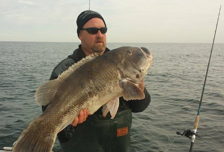 world record tautog, blackfish, white crabs, green crabs, Atlantic wreck fishing