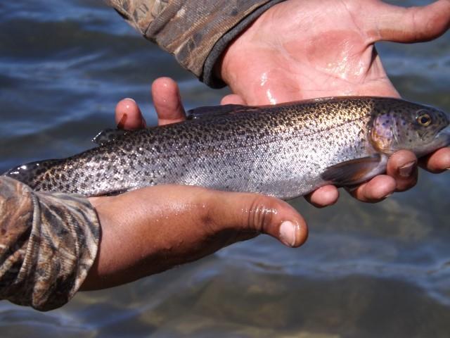 rainbow trout, newton pond, tidbury pond, stocking, opening day