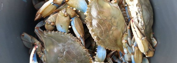 Sussex waterman arrested for multiple commercial crabbing violations