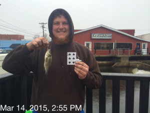 white perch, mispillion river, milford, delaware, sussex county, all species fishing tournament, dsf playing cards