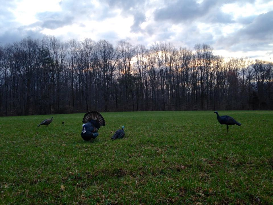 Turkey Decoys, delaware youth turkey hunting day