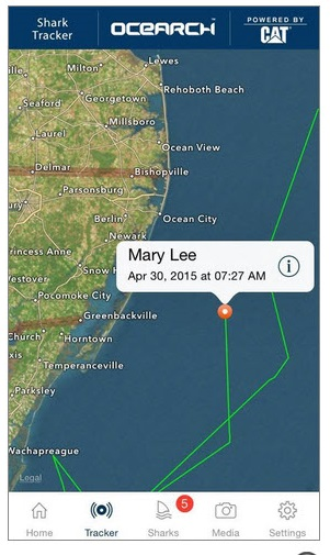 mary lee, ocearch, great white sharks, shark tracking, delaware, sussex county, assateague island state park