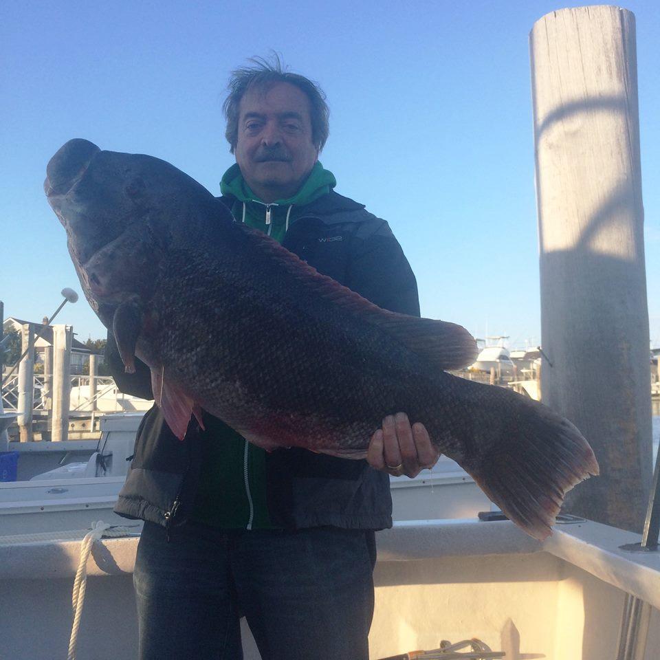 tautog, blakcfish, whitechinner, jims bait and tackle, cape may, taug fishin,
