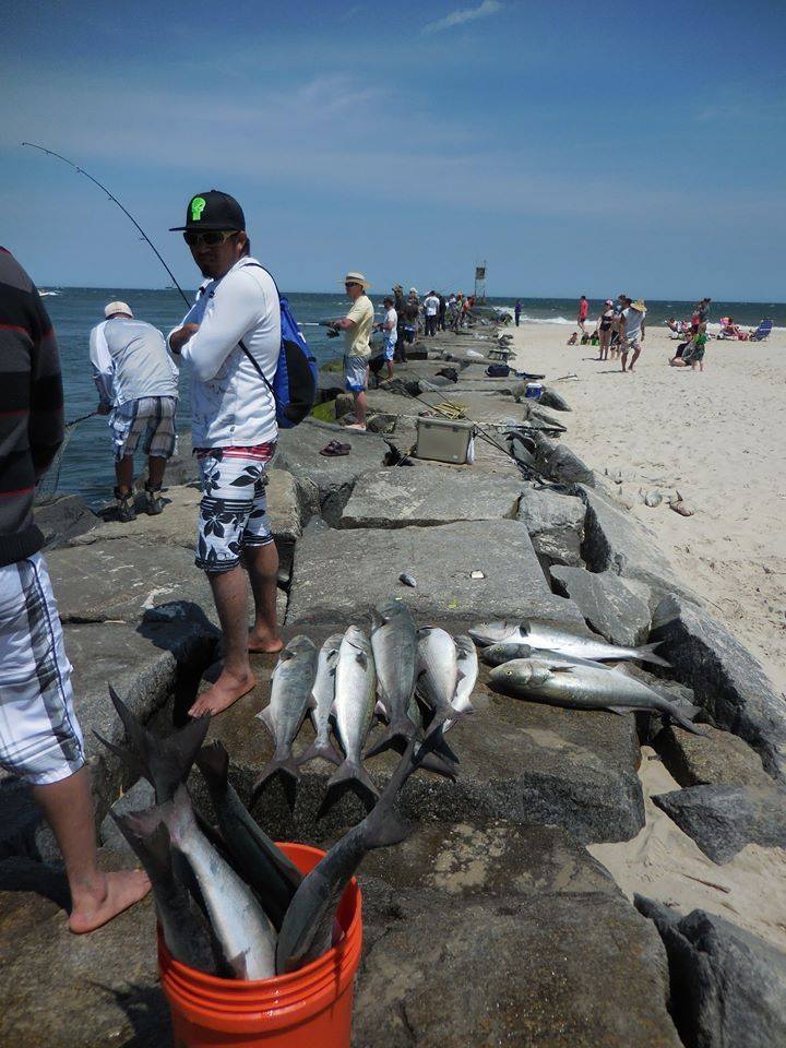 Fishing update delaware surf for Indian river inlet fishing report