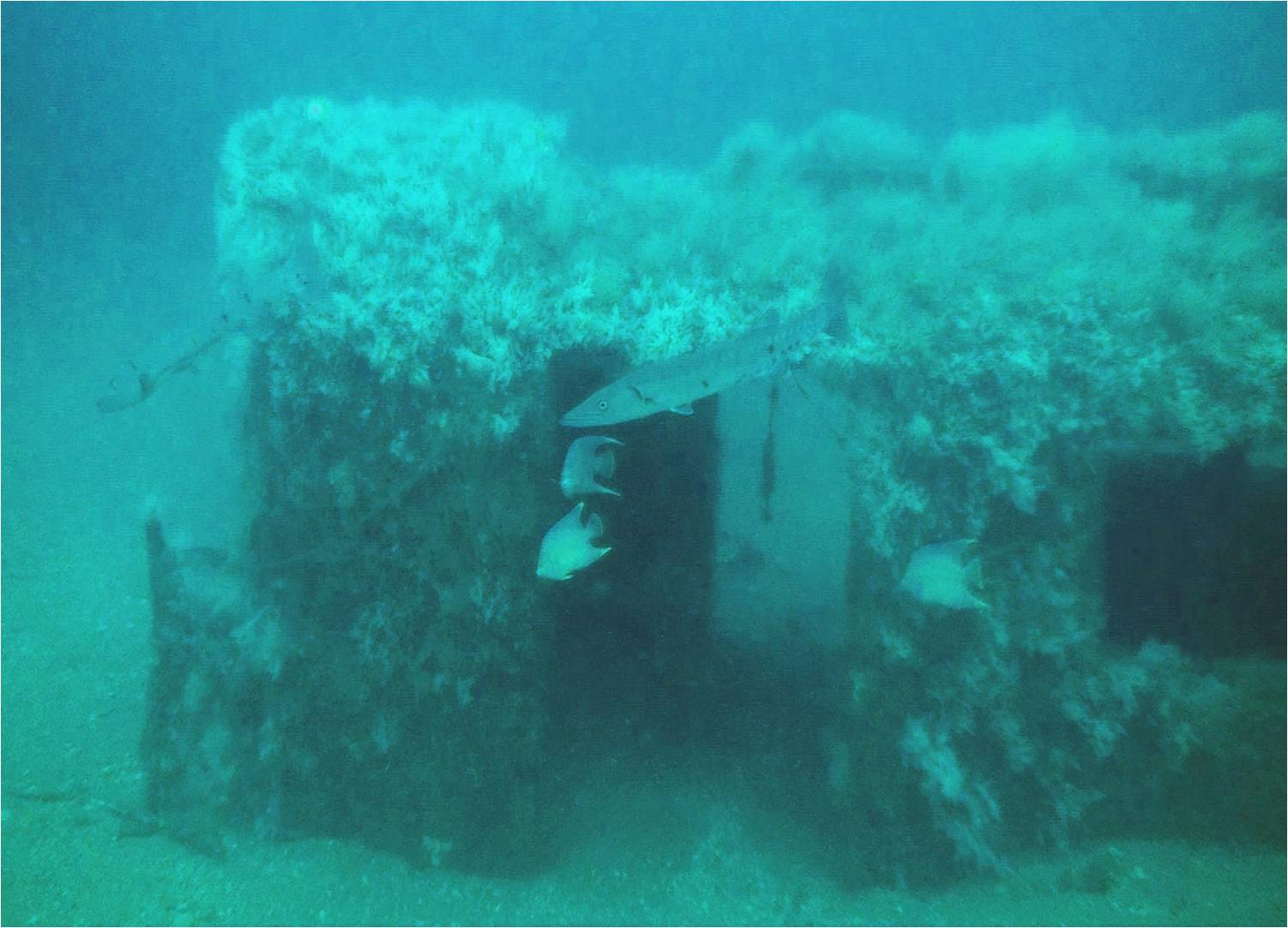 Artificial Reef, photo from NOAA
