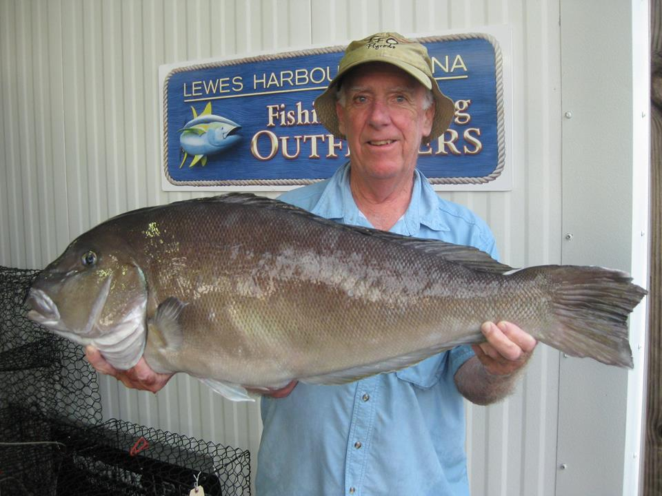 blueline tilefish pending delaware state record, sussex county, lewes harbor marina, baltimore canyon, atlantic fish, deep dropping,