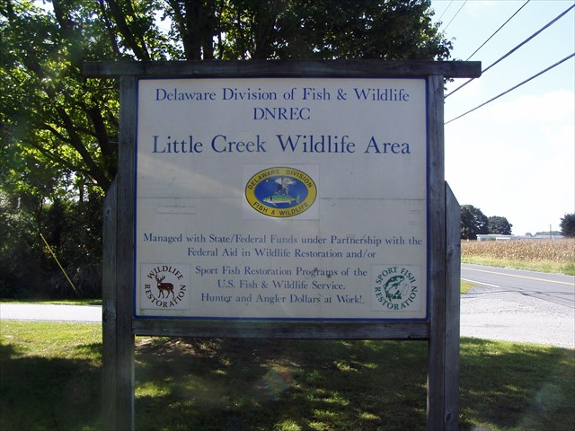 Little Creek Wildlife area, delaware, kent county, cedar swamp