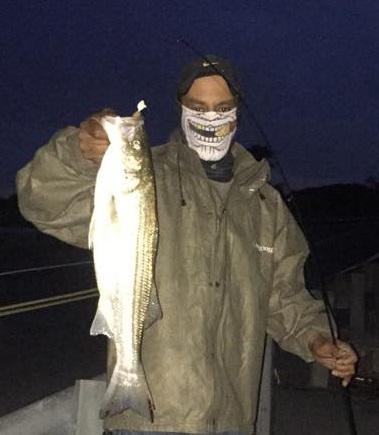 striped bass, augutine beach, delaware, kent county, delaware river, rockfish, linesider, atlantic migratory fish, white fish with black stripes
