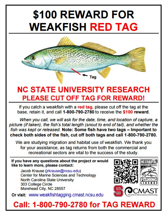 weakfish tagging project, red tag reward, sussex county, delaware, atlantic ocean, migratory fish