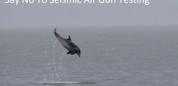 Seismic Airgun Testing Survey