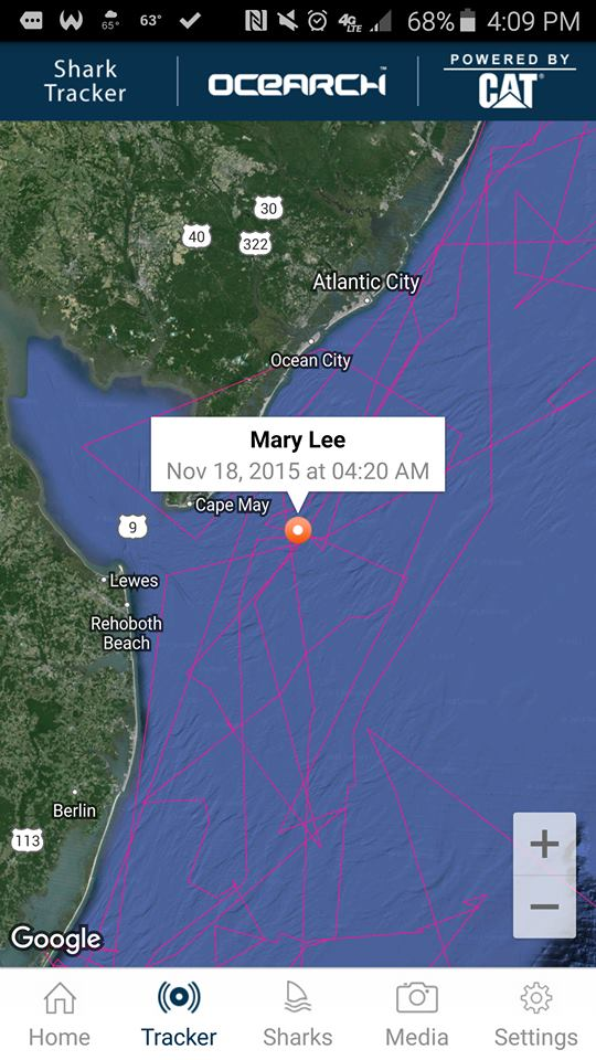 Mary Lee,delaware, sussex county, wildwood,NewJersey, ocearch, great white shark tracking