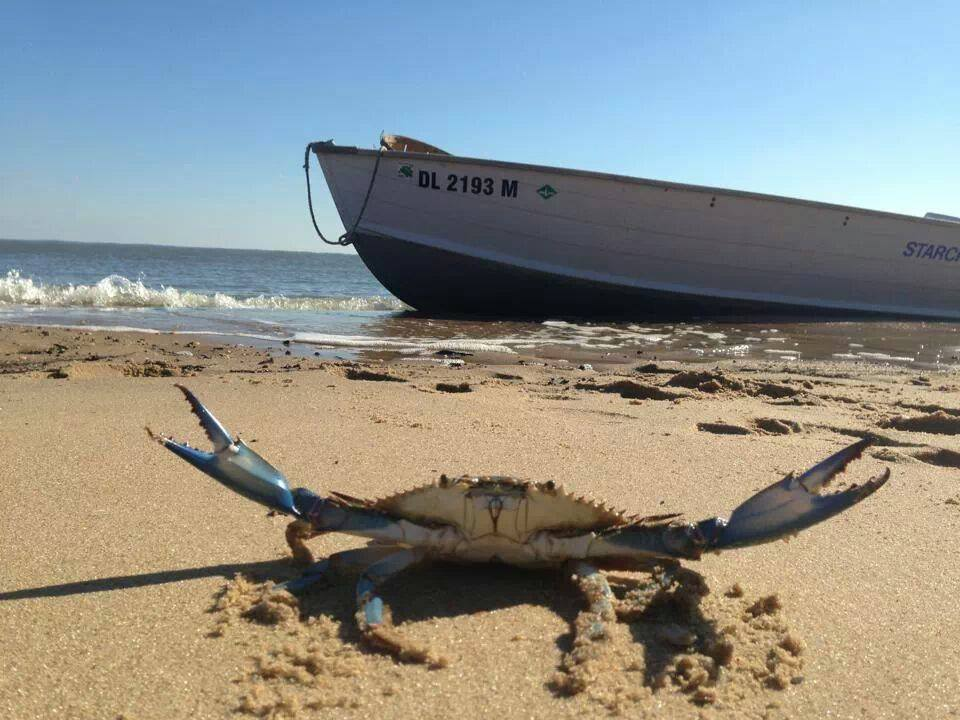 Waterman arrested on 93 charges of blue crab fishing for Dnrec fishing report