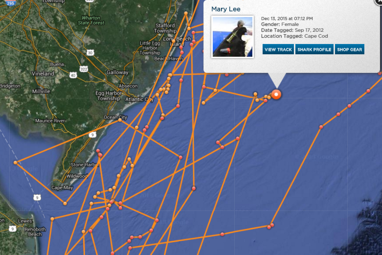 mary lee, greatwhite shark tracker, ocearch