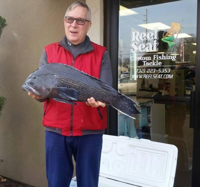 jersey black sea bass record