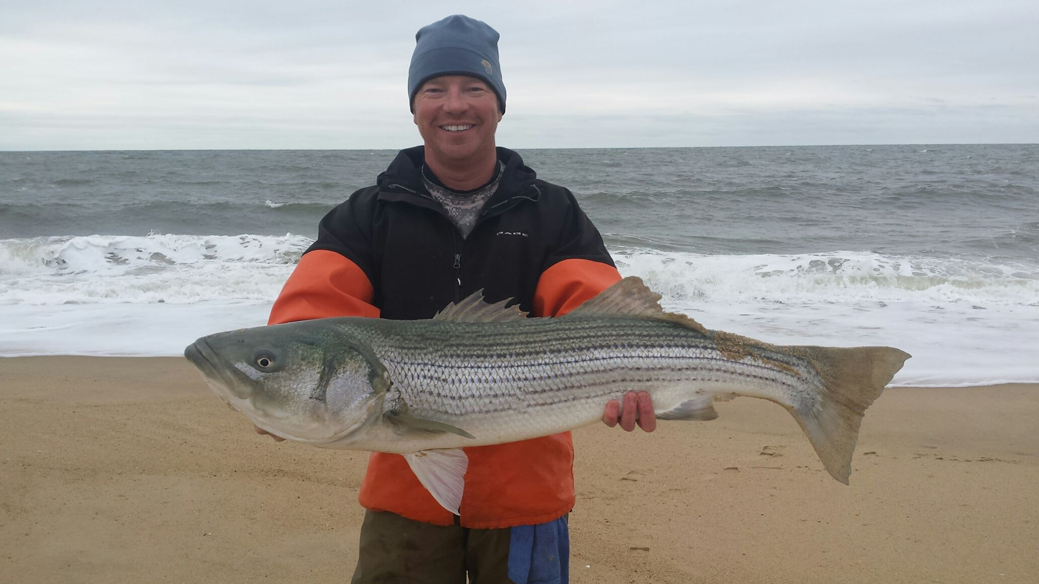 striped bass, rockfish, linesiders, cape henlopenstate park, fresh bunker, delaware, sussex county