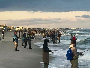 Once the blitz is on in New Jersey the beaches get blitzed by anglers trying to hook up. They come from all over the coast to fish these beaches .. photo by Ryan Gee