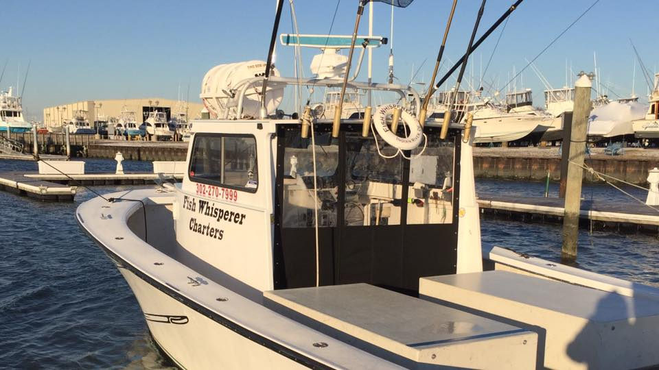 Fish Whisperer charters, delaware, sussex county, indian river inlet