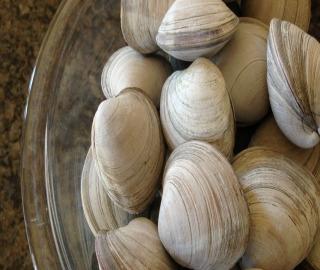 hard clam, clamming, littlenecks, delaware, sussex county